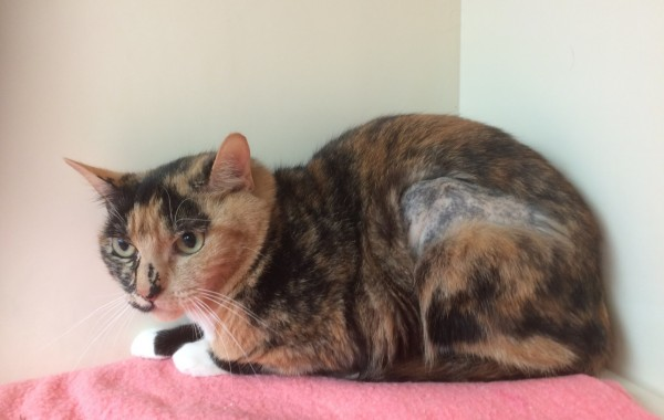 MITZY – RESERVED