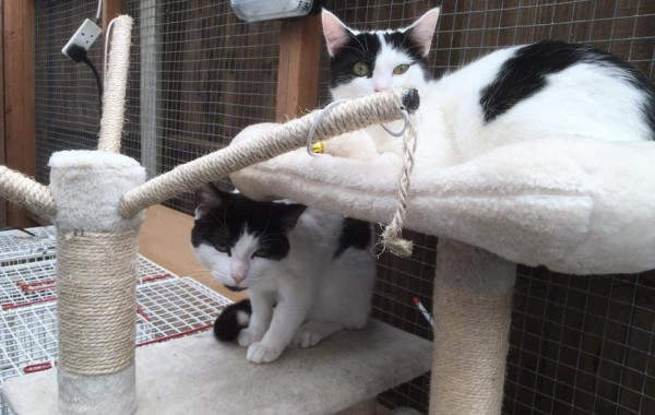 BERTIE AND BILLY – RESERVED